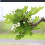 Beautiful Linux Desktop, Solus OS 2017.04